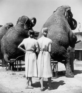 6_Dahl_Wolfe_TwinsWithElephants